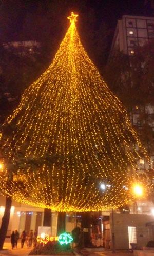 111205_tree